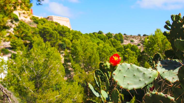 Ibiza flora
